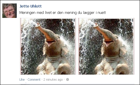 FB 020113 Jette elefant