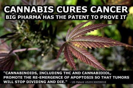 Cannabis cures cancer2
